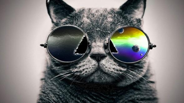 CultFit Cat