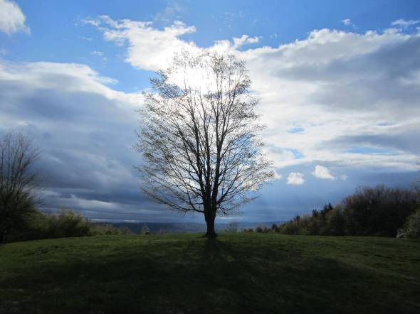 CultFit Tree
