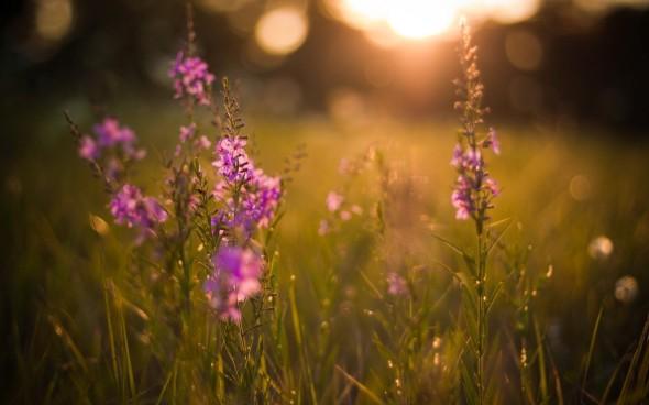 CultFit Meadow