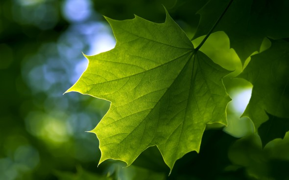 CultFit Leaf