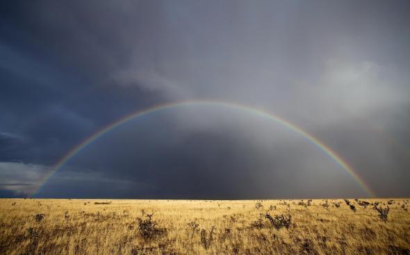 CultFit Rainbow