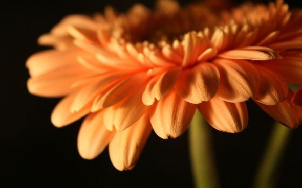 CultFit Flower