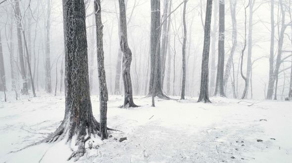 CultFit Snow