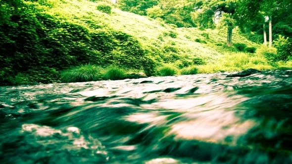 CultFit River