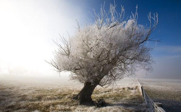 CultFit Frozen